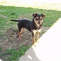 Adopt A Pet :: Prissy - Adamsville, TN
