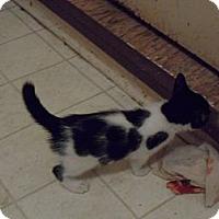 Adopt A Pet :: Jill - Pensacola, FL