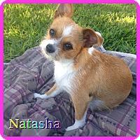 Adopt A Pet :: Natasha - Hollywood, FL