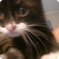 Adopt A Pet :: Marlo - Tampa, FL