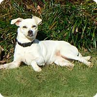 Adopt A Pet :: Chanel - Centerville, TN
