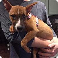 Adopt A Pet :: Millington - CHICAGO, IL