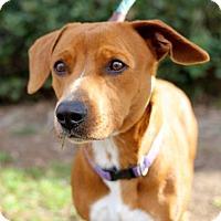 Adopt A Pet :: Escali - San Diego, CA