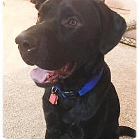 Adopt A Pet :: Ore City - Broomfield, CO