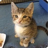 Adopt A Pet :: Milly - Camden, DE