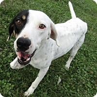 Adopt A Pet :: Fifi - Sarasota, FL