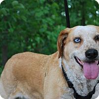 Adopt A Pet :: Roxy - New Castle, PA