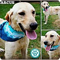 Adopt A Pet :: Marcus - Kimberton, PA