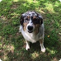 Adopt A Pet :: Suess - Elk River, MN