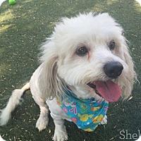 Adopt A Pet :: Adonia - Meridian, ID
