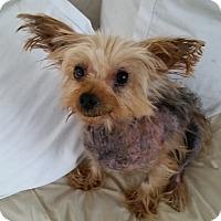 Adopt A Pet :: Nemo - West Palm Beach, FL