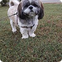 Adopt A Pet :: Rex - Scottsboro, AL