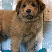 Adopt A Pet :: Taupe - Waldorf, MD