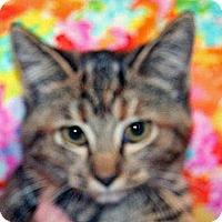 Adopt A Pet :: Tootsie - Wildomar, CA