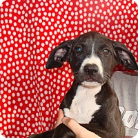 Adopt A Pet :: Teegs - Oviedo, FL