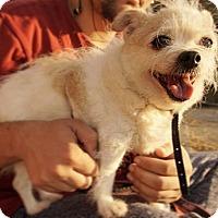 Adopt A Pet :: Diego - Brooklyn, NY