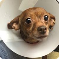 Adopt A Pet :: Estelle - Oak Ridge, NJ