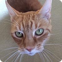 Adopt A Pet :: Cheddar - Chula Vista, CA
