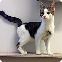 Adopt A Pet :: Zeppelin - Janesville, WI