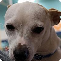 Adopt A Pet :: Lil Man - Madisonville, LA