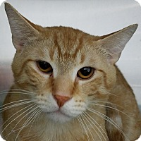 Adopt A Pet :: Tom - Elyria, OH