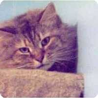 Adopt A Pet :: Louise - East Stroudsburg, PA