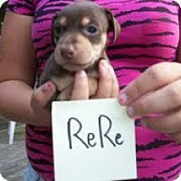 Adopt A Pet :: ReRe - Malaga, NJ