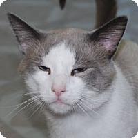 Adopt A Pet :: Talos - Chesapeake, VA