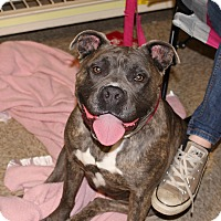 Adopt A Pet :: Fiona - Yuba City, CA