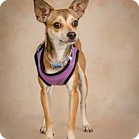 Adopt A Pet :: A Bambi - Jupiter, FL