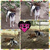Adopt A Pet :: Vella - Fowler, CA