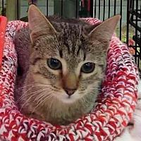 Adopt A Pet :: Hannah - Sacramento, CA