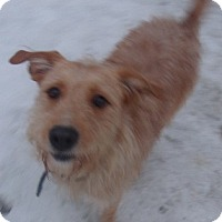 Adopt A Pet :: SCOOBY DOO - Coudersport, PA