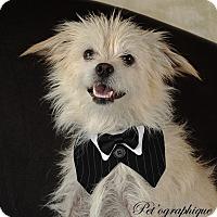 Adopt A Pet :: Eisenhower - Henderson, NV