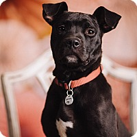 Adopt A Pet :: Thunder Bolt - Portland, OR