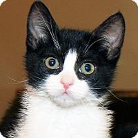 Adopt A Pet :: Lynzee - Irvine, CA