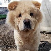 Adopt A Pet :: Mojoe - Ventura, CA