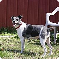 Adopt A Pet :: Freckles - Joplin, MO