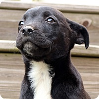 Adopt A Pet :: Swirly~adopted! - Glastonbury, CT