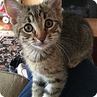 Adopt A Pet :: Rhianna - River Edge, NJ