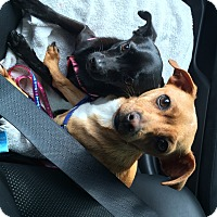 Adopt A Pet :: Shayla's Tito aka Frank - Las Vegas, NV