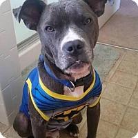 Adopt A Pet :: Batman - Dayton, OH