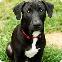 Adopt A Pet :: Jed - Red Lion, PA