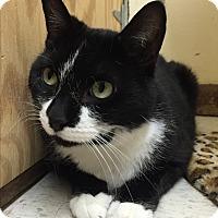 Adopt A Pet :: Tux - Rockaway, NJ