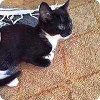 Adopt A Pet :: Batman - Putnam, CT