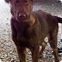 Adopt A Pet :: I'M ADOPTED Stella Mahoney - Oswego, IL