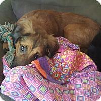 Adopt A Pet :: Oliver - Glastonbury, CT