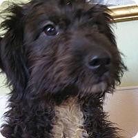 Adopt A Pet :: Valentine - Yucaipa, CA