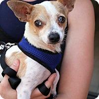 Adopt A Pet :: Leo! - New York, NY