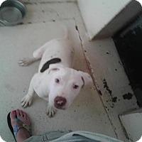 Adopt A Pet :: Orbit - Fayetteville, WV